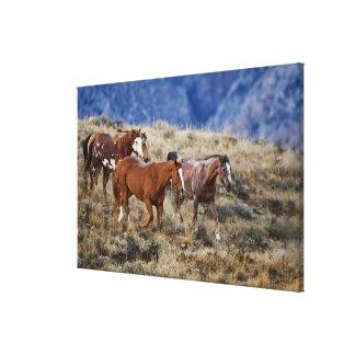 Hästar som strövar omkring de sceniska backarna av canvastryck