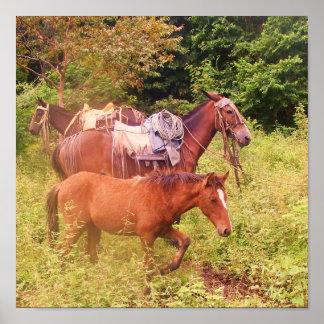 hästar South America Poster