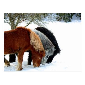 Hästar Vykort