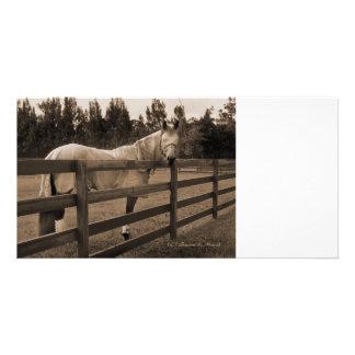 Hästen i klipsk klädersepia tittar tillbaka över s anpassade foto kort