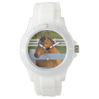Hästen poserar vid den Flathead körsbärsröda