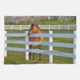 Hästen poserar vid den Flathead körsbärsröda Kökshandduk