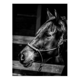 Hästen profilerar vykortet vykort