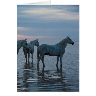 Hästhälsningkort - hålla ögonen på för Camargue Hälsningskort