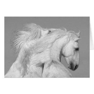 Hästhälsningkort - lek för två vithingstar hälsningskort