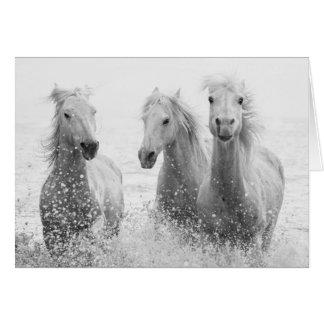 Hästhälsningkort - plaska för tre vithästar hälsningskort