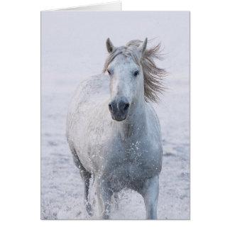Hästhälsningkort - vithästspringor på soluppgången hälsningskort