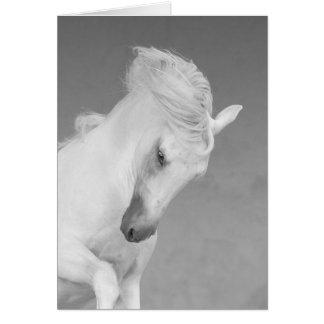 Hästhälsningkort - vithingsten kastar huvudet hälsningskort
