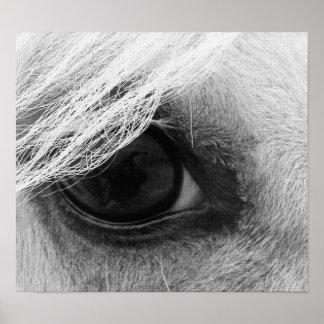 Hästöga i svartvitt poster