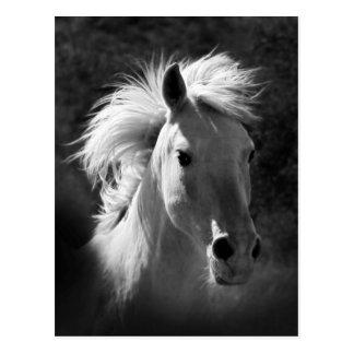 Hästporträtt V Vykort