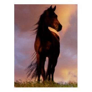 Hästvykort Vykort