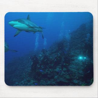 Hav för korall för barriärrev för grå färgrevhaj musmatta