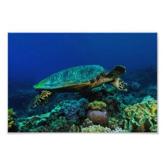 Hav för korall för barriärrev för Hawksbill Fototryck
