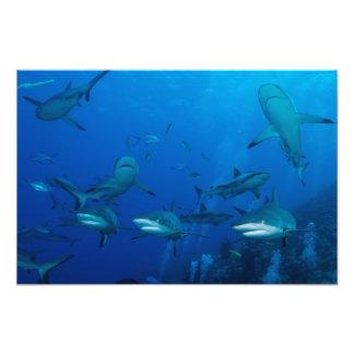 Hav för korall för barriärrev för revhaj underbart fototryck