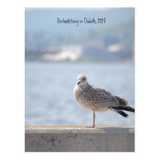 Hav Gull2, fågelskådning i Duluth, MN Vykort