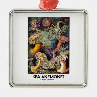 Havsanemoner Silverfärgad Fyrkantigt Julgransprydnad