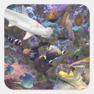 Havslivklistermärkear Fyrkantigt Klistermärke