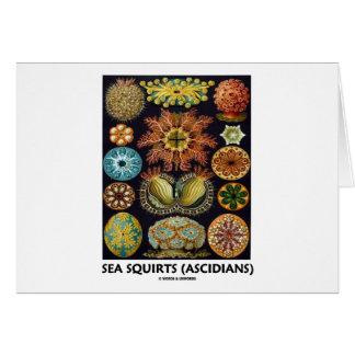 Havsputtefnask Ascidians - Artforms av naturen Hälsnings Kort
