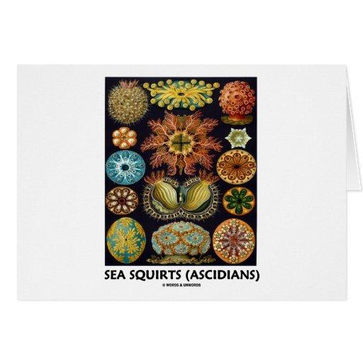 Havsputtefnask (Ascidians - Artforms av naturen) Hälsnings Kort