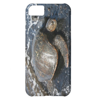 Havssköldpadda på svart Sandstrand iPhone 5C Fodral