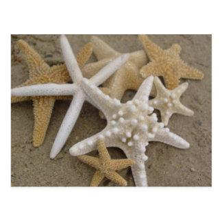 Havsstjärnor Vykort