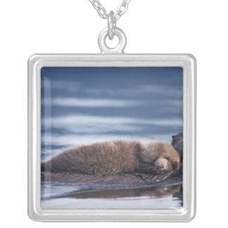 havsutter, Enhydralutrislutris, mor med Silverpläterat Halsband