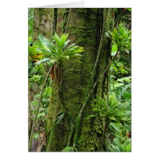 Hawaiansk Rainforest Hälsningskort