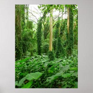 Hawaiansk regnskog poster