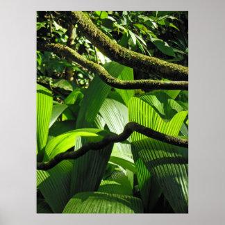 Hawaiansk tropisk regnskog poster