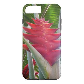 Hawaianska Heliconia