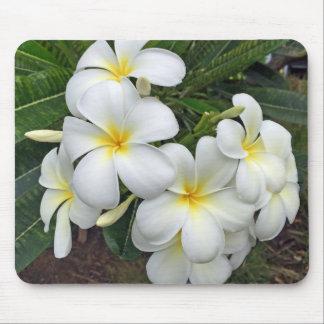 Hawaii Plumeriablommor Musmatta