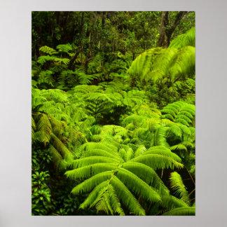 Hawaii stor ö, frodig tropisk grönska in poster