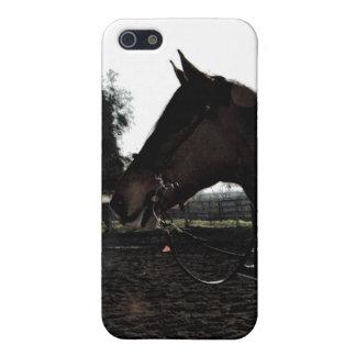 Head iphone case för häst iPhone 5 cases