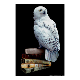 Hedwig på bokar poster