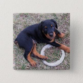 "Heidi Rottweiler ""oskyldig"" knäppas Standard Kanpp Fyrkantig 5.1 Cm"