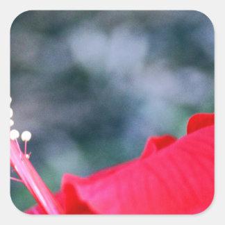 Hibiskus 4 fyrkantigt klistermärke