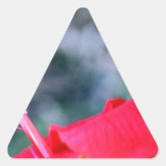 Hibiskus 4 triangelformat klistermärke