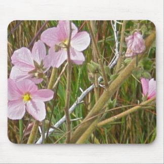 Hibiskus för vildrosor i salt Marshobjekt Musmatta