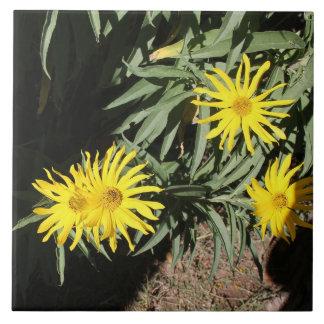 """Hierbas för Flores en mi """"blommar i min ogräs """", Kakelplatta"""