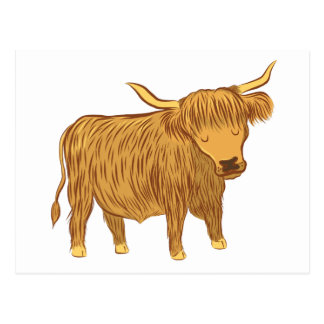 highland cow (coo) vykort