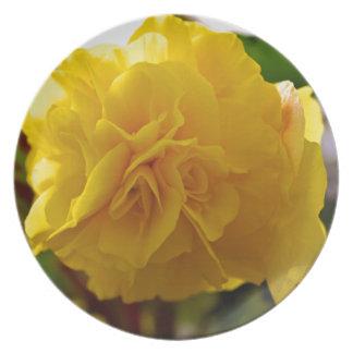 Hisnande Begonia Tallrik