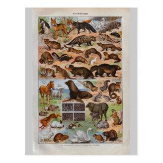 Historiska djur för vintage med päls eller hår vykort