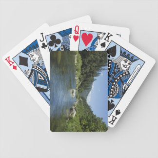 Hjärta av fjäderfloden spelkort