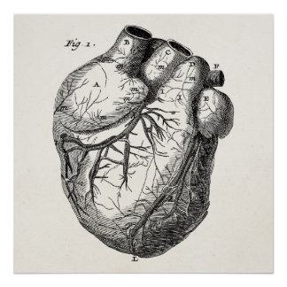 Hjärtor för anatomi för vintage1800shjärta Retro h Poster
