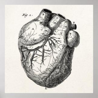 Hjärtor för anatomi för vintage1800shjärta Retro Poster