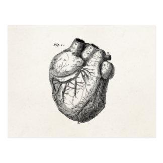 Hjärtor för anatomi för vintage1800shjärta Retro Vykort