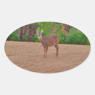 Hjort en Doe i vintergräset Ovalt Klistermärke