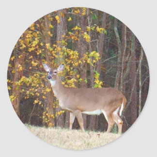 Hjort framme av det gula höstträd runt klistermärke