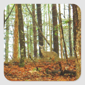 Hjort i de dimmiga gräsen fyrkantigt klistermärke