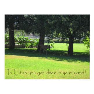 Hjort i din gård! vykort